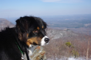 Dogs like days off spent hiking...
